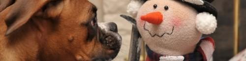 cropped-dog-snowman.jpg