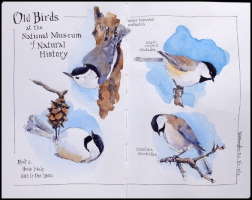 DC_Chickadees-Nuthatch