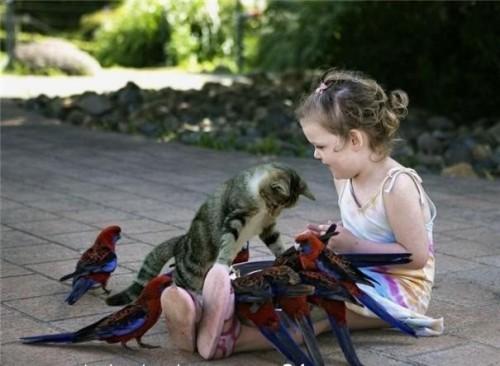 kitten birds